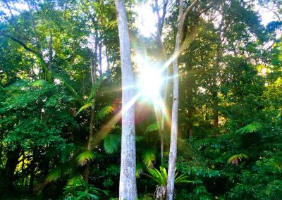 rainforest sunset small